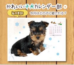 フリー。子犬カレンダー部