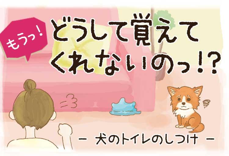 しつけ の 子犬 トイレ 【獣医師監修】子犬のしつけ方~トイレ・噛みグセ・外へのならし方など徹底解説|いぬのきもちWEB MAGAZINE